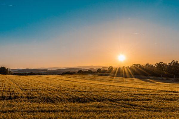 Лесна продажба на земеделска земя